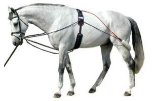 John Whitaker Whitaker - Horse Training System