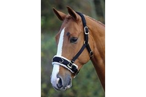 Shires Fleece Lined Lunge Cavesson - Black: Full by Shires