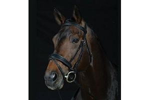 Collegiate Padded Shaped Raised Noseband Flash Bridle Black Full