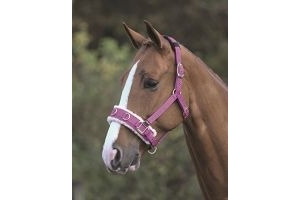 Shires Fleece Lined Lunge Cavesson - Raspberry: Full