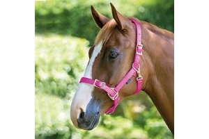 Shires Pro Adjustable Headcollar-Pink Cob