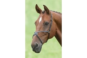 Shires Blenheim Mexican Grackle Noseband-Havana with Stainless Steel Pony