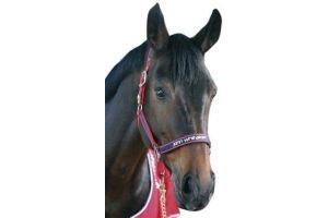 John Whitaker Whitaker - Horse Headcollar Padded Fleece Red/Navy Cob