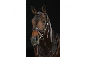 Collegiate Raised Flash Bridle II