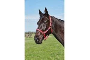 Roma Brights Pony/Horse Headcollar: Hot Pink: Warmblood