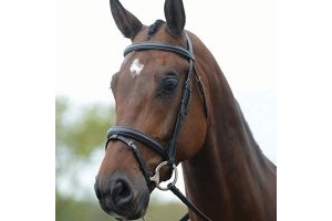 Kincade Flash Bridle(Black, Pony)