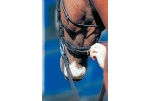 ProLite Bridle/Noseband/Curb Chain Relief Pad-Black Noseband Cushion