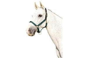 Kincade Webbed Headcollar With Leather Crown Hunter Green Pony