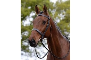 Kincade Hunt Style Cavesson Bridle - Black Pony