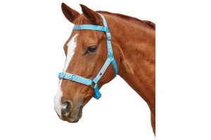 Kincade Brights Nylon Padded Lunge Cavesson