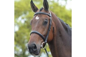Kincade Raised Cavesson Bridle