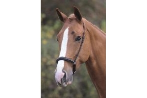 Shires Blenheim Padded Drop Noseband-Havana Pony