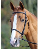 Aviemore Raised Cavesson Bridle Brown