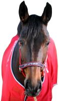 John Whitaker Padded Headcollar Navy/Red