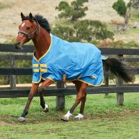 Saxon 600D 0g Lite Weight Standard Neck Turnout Rug Blue/Gold
