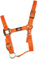 Saxon Brights Headcollar Orange