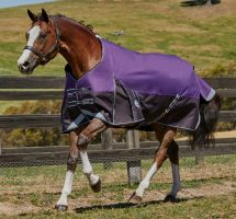 WeatherBeeta ComFiTec Plus Dynamic 0g Lite Weight Standard Neck Turnout Rug Purple/Grey