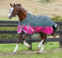 WeatherBeeta ComFiTec Plus Dynamic 0g Lite Weight Standard Neck Turnout Rug Sea Green/Pink/Yellow