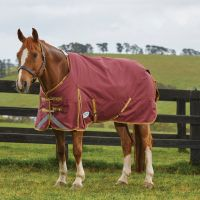 WeatherBeeta ComFiTec Plus Dynamic 220g Medium Weight Standard Neck Turnout Rug Burgundy/Gold